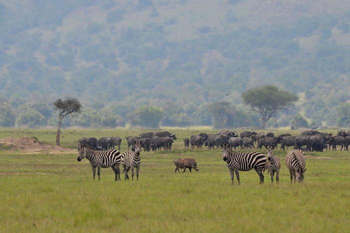 Image by Chris Roche Magashi Camp Akagera National Park Rwanda wildlife viewing