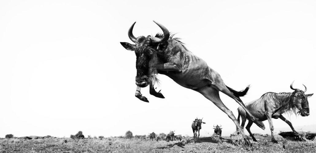 Greatest Masai Mara Photographer of the Year Exhibition