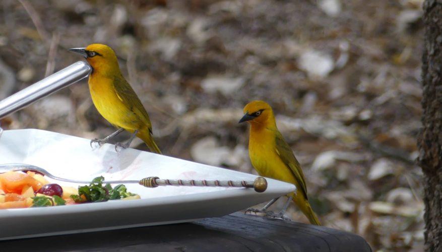 birds, dinner, hwange national park, zimbabwe safaris, wildlife safaris