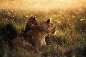 lions-of-east-africa-tanzania-mikumi